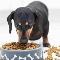 Сухие корма для собак | Как выбрать?